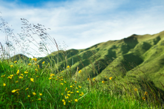 Photo of green, grassy hills